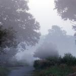 Natur neu entdecken - Naturfotografie in der Wahner Heide